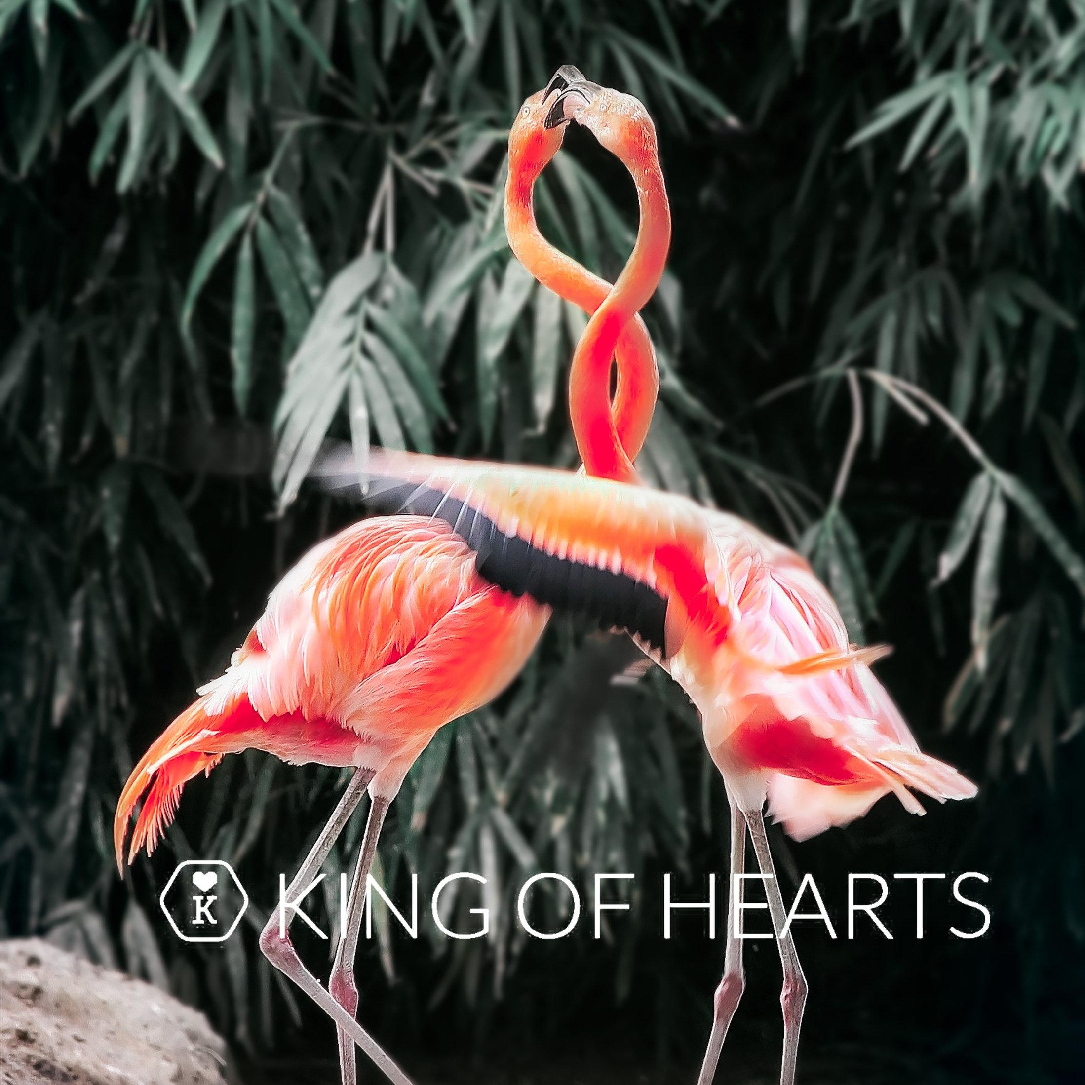 Webshop in mannen-accessoires-flamingo-tuesday-jpg